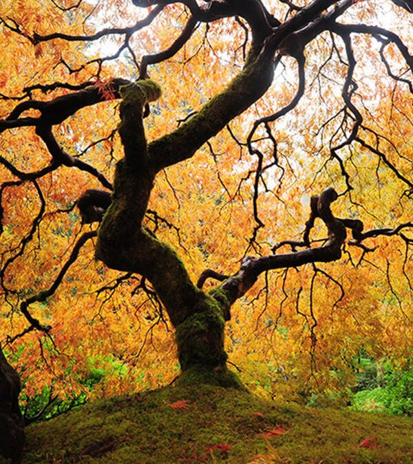 The 10 Best Autumn Trees