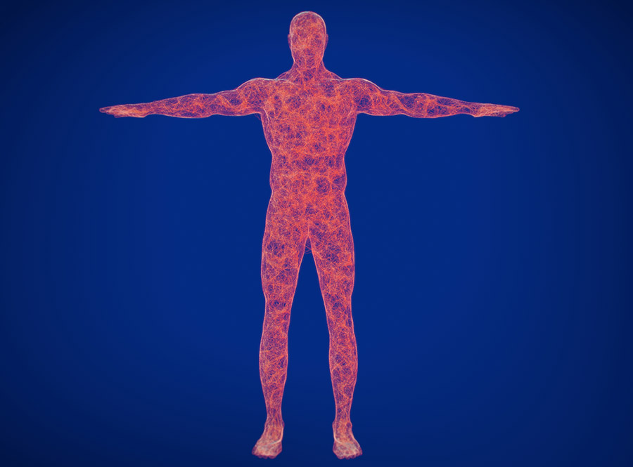 The Role of the Parasympathetic Nervous System in Healing